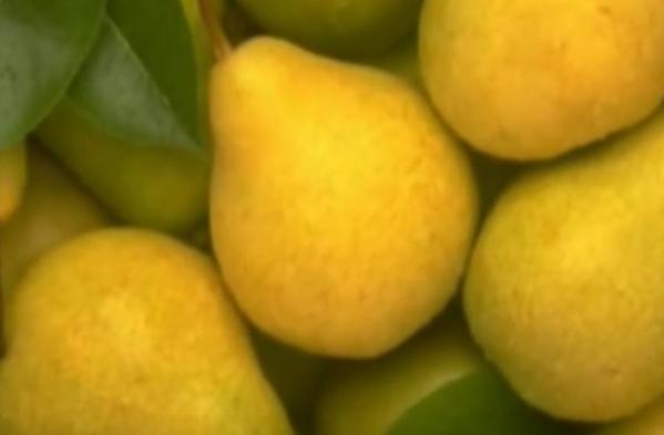 Basura iyi gelen meyveler ve sebzeler
